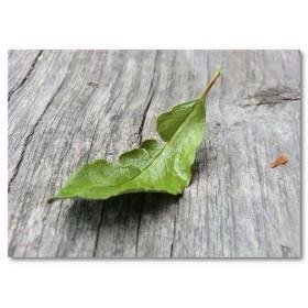 Αφίσα (φύση, ξύλο, δάσος, φύλλα)
